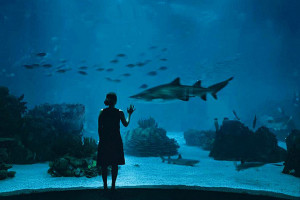 Oceanarium-interior_54_990x660
